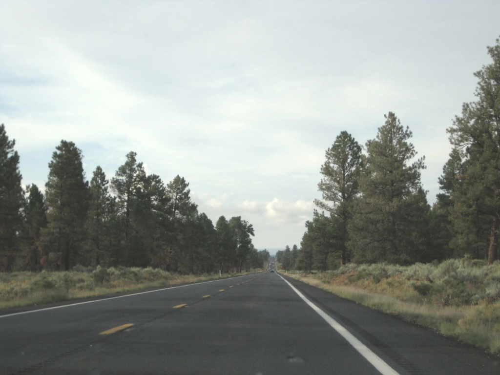 long-highway-trees